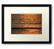Lone Gull Framed Print