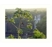 Iguazu toucans 2 Art Print