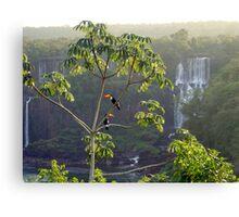 Iguazu toucans 2 Canvas Print