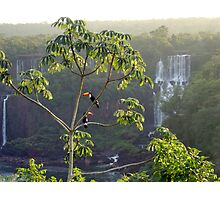 Iguazu toucans 2 Photographic Print
