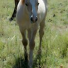 Foaling Time by olivia destandau