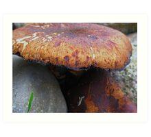 Mushroom Art Print