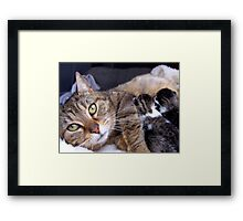 Dixey and her babies Framed Print