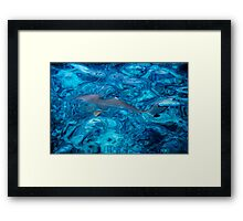 Baby Shark in the Turquoise Water. Production by Nature Framed Print