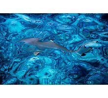 Baby Shark in the Turquoise Water. Production by Nature Photographic Print