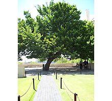 Tree of Memories Photographic Print