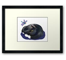 Dragonfly Buzzes a Resting Cat Framed Print