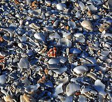 Shells, Eighty Mile Beach, Western Australia by Adrian Paul