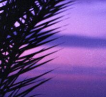 Palm tree on beach Ibiza silhouette against dusk sunset sky square medium format film analogue photos Sticker