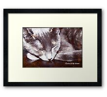 Tails of the kitten, dedicated to Monday's Framed Print