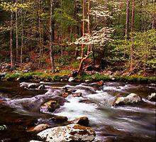 SPRING ALONG LITTLE RIVER by Chuck Wickham