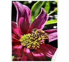 Pollen Hunter Poster