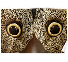 What does this look like to you??? Luda got it right!  Its a butterfly ..... Its a OWL butterfly Poster