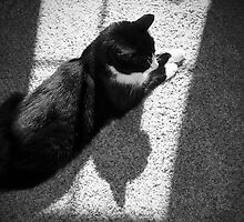 Cat Shadows by Chelsea Brewer