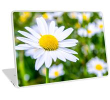 Alpine Daisy  Laptop Skin