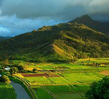 Hanalei Valley Taro Fields by James Eddy