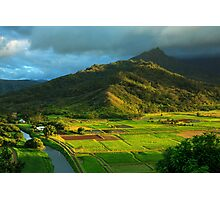 Hanalei Valley Taro Fields Photographic Print
