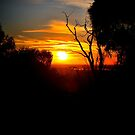 Sunrise in the Forest by Lorraine McCarthy by Lozzar Landscape