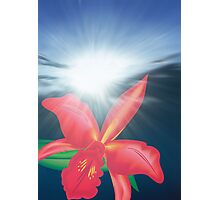 Orchid Flower in Sunrise Photographic Print