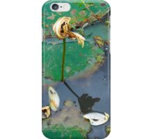 Reflection Of A Water Lily iPhone Case/Skin