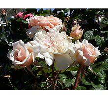 Rose 11 Photographic Print