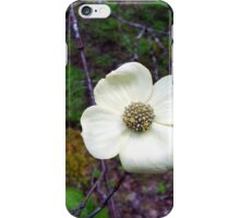 Dogwood from Evans creek iPhone Case/Skin