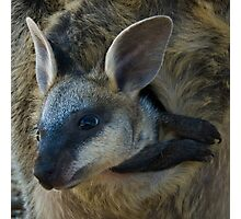 Swamp Wallaby Series - Part 3 - Peek a Boo Photographic Print
