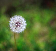 Make a Wish by wovenandspun