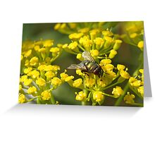 Fly on fennel flowers Greeting Card