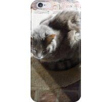 Basking iPhone Case/Skin