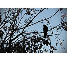 Evening Crow Photographic Print