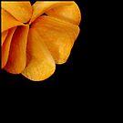 Tasty flower by Bluesrose