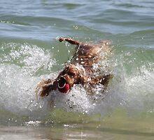 Myblondeheadedstompiewompierealgonesurfer-dog by aussiebushstick