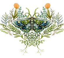 Moth with Plants by Leslie Evans