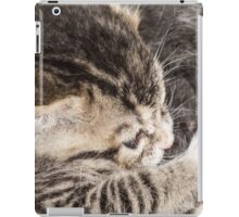 My Baby Kitten iPad Case/Skin