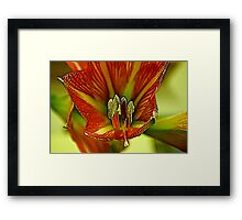 Inside the Lily Framed Print