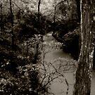 Peace Creek by Ms.Serena Boedewig