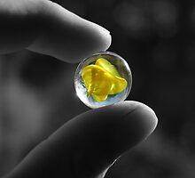 yellow by Lisa Skala