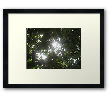 Sunlight streaming through the fronds of a lush thick tree Framed Print