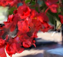 ABSTRACT BEGONIAS by pjm286