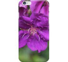 Tibouchina; An Amazing Purple. iPhone Case/Skin