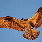 Awesome Wings!! by jozi1