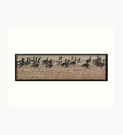 geese #3 Art Print