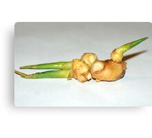 ginger root Canvas Print