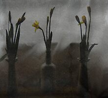 Dafs 135 by scarlet james