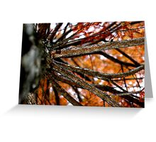 Autumnal Cypress Greeting Card
