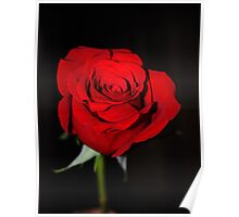 rosE red Poster