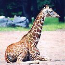 Poorly Baby Giraffe by stellaozza