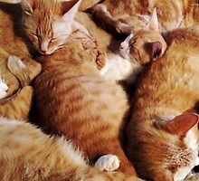 Ginger cats by Samantha Lusher