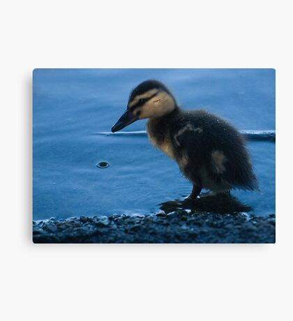 It's too cold Mummy! Canvas Print